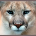 How To Flirt With A Cougar